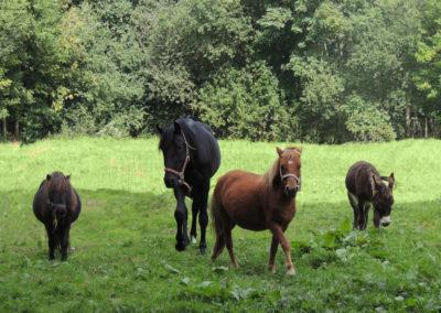 Parc Saint Léger - Nos poneys se détendent