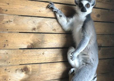 Parc Saint Léger - Kenya prend la pose